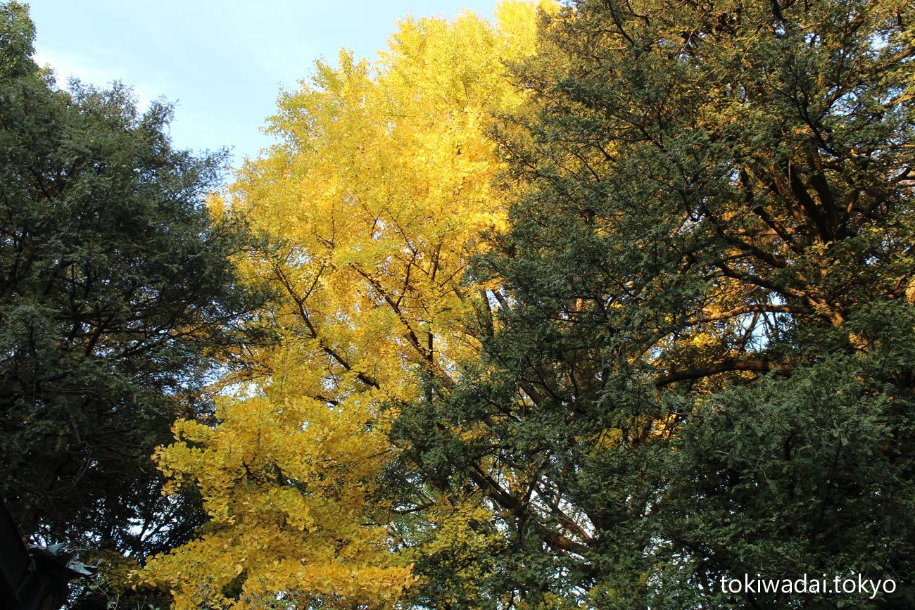 ときわ台 「つ・つ・つ GARDEN」ついたちgarden 令和元年12月1日(土) 天祖神社の紅葉